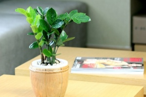 小型植物租摆套餐