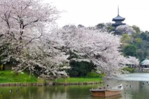 新修订的《重庆市城市园林绿化条例》于2020年3月起施行!
