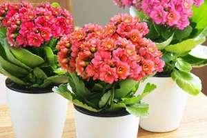 冬季室内花卉养护注意事项