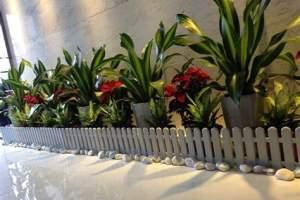 春季花卉租摆怎么防御病虫害
