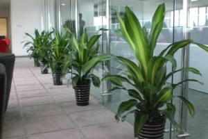 办公室绿植租赁区域方案
