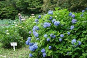 全国花卉法规《云南花卉产业发展条例》实施