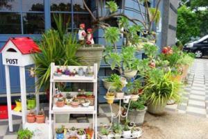 东四绿植租摆中适合春季租赁的室内植物