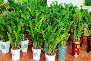 哪几种办公室植物比较受人们欢迎