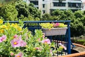 花卉租赁行业是否有望发展大学校园市场