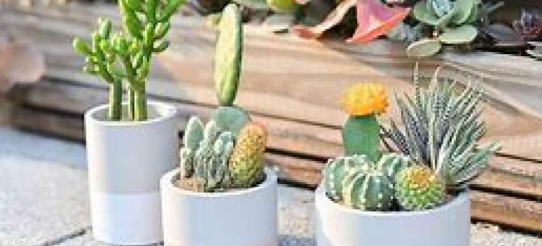 在苗圃花卉选购盆栽植物的注意事项