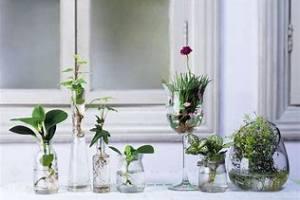 花卉绿植租赁,水培花卉的养护技巧