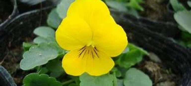 花卉租赁,花卉养护肥料搭配技巧