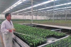 花卉产业让贫困户走上致富路