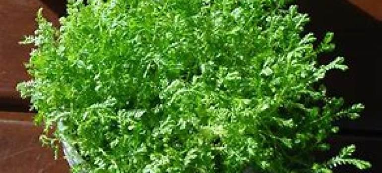 绿植租摆,盆栽花卉的出室建议